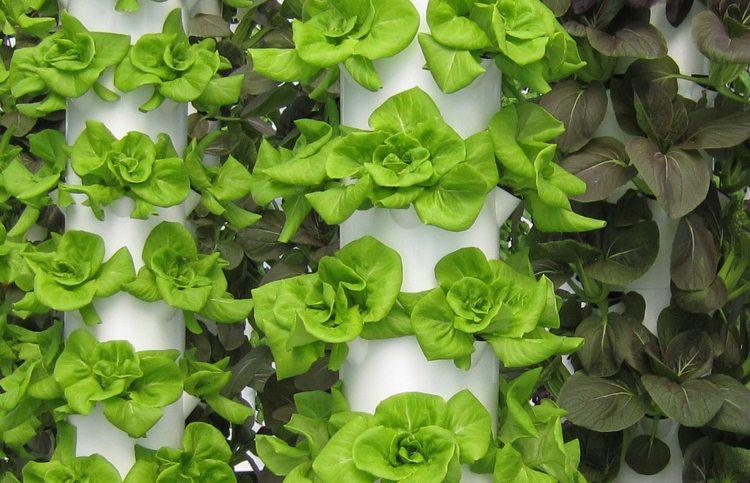 Mô hình trồng rau sạch khí canh