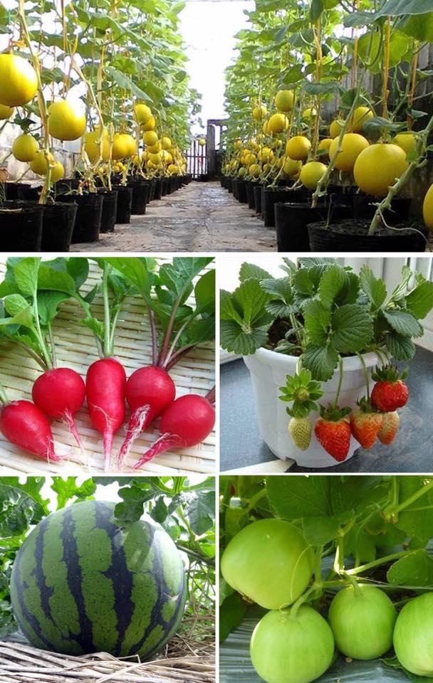 Hạt giống cây trồng hoa rau củ quả các loại tại VƯỜN RAU VIỆT của cô Duyên