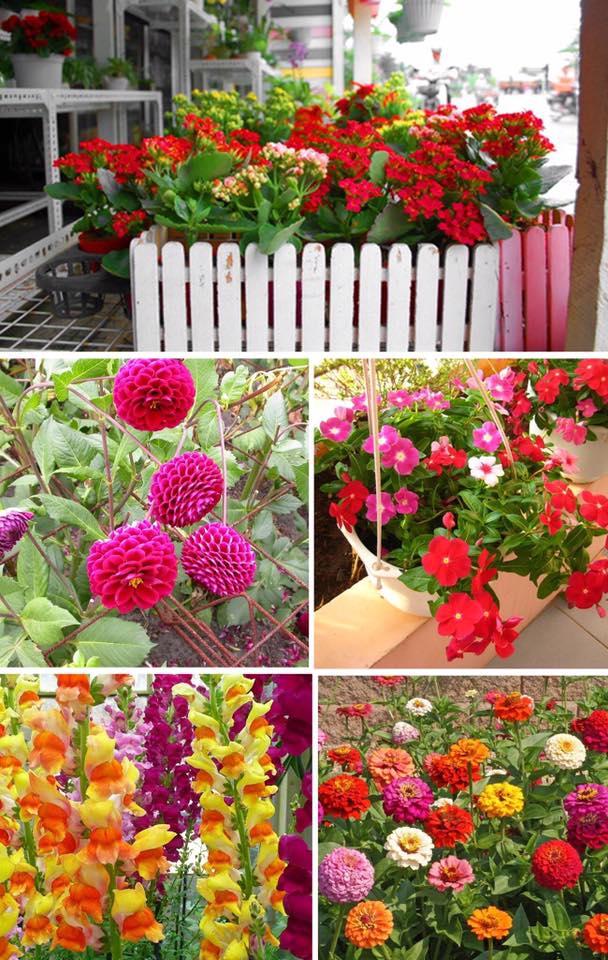 Hạt giống hoa được trồng trong chậu sau một thời gian chăm sóc