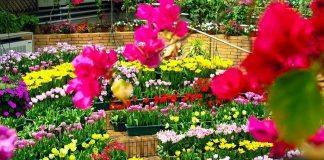 Kinh doanh hoa tươi, hạt giống hoa
