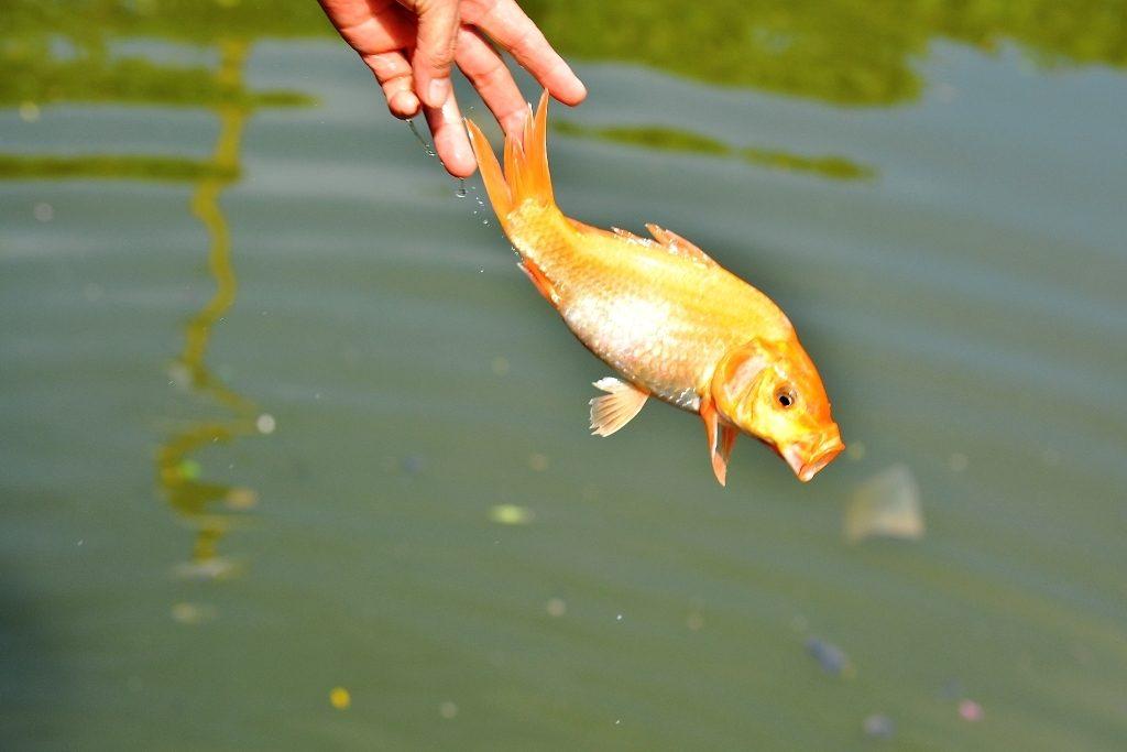 Lễ nghi Thả cá chép tiễn ông Công ông Táobay về trời cũng là lúc tạm biệt những vui-buồn, được-mất của năm cũ, là thời khắc để cầu nguyện cho những điều tốt lành nhất cho năm mới sắp tới.