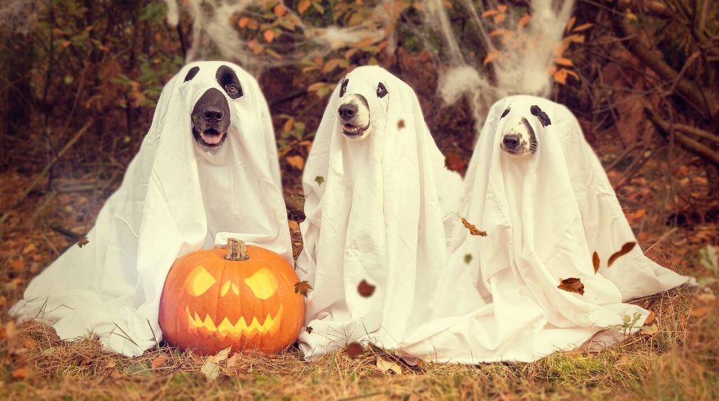 kinh-doanh-halloween